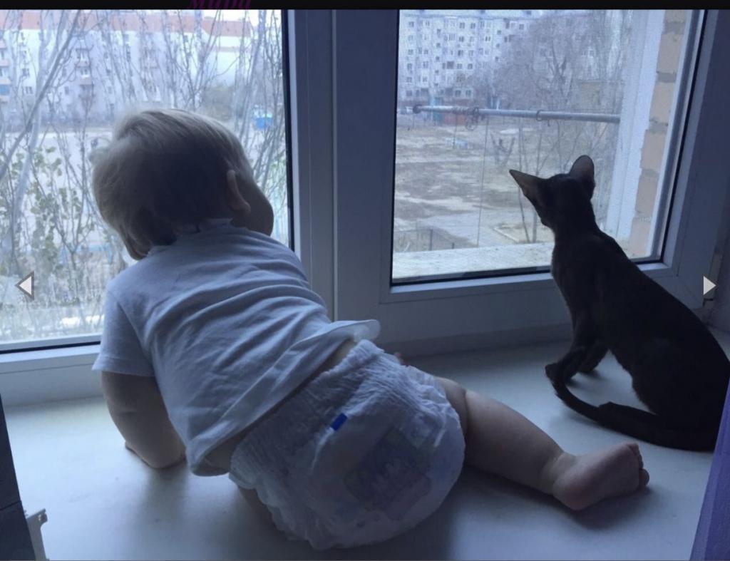 Питомник ориентальных кошек Altfaizer , заводчик Алиса Альтфайзер - Спасибо за наше чудо!!!