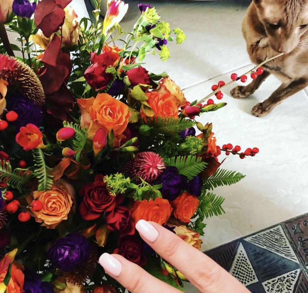 Питомник ориентальных кошек Altfaizer , заводчик Алиса Альтфайзер - Nica Star Altfaizer Kiss наша звезда!!!